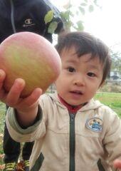 りんごと三男