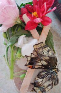 蝶になったミクオ