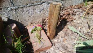 ナナのお墓
