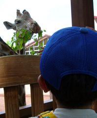 茶臼山動物園きりん
