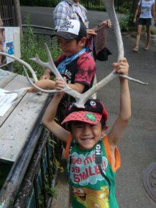 多摩動物園のトナカイの角