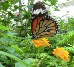 多摩動物園昆虫館
